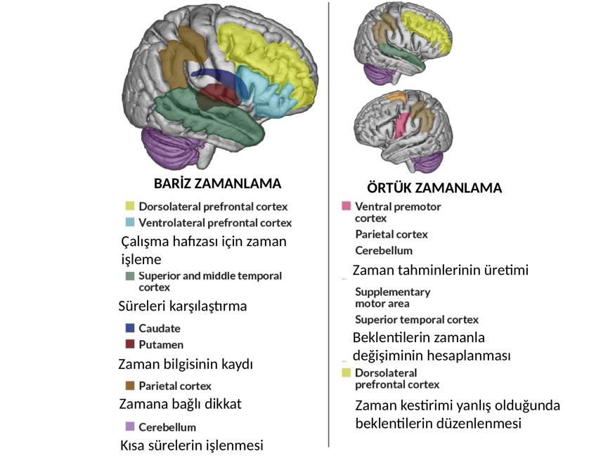 Beynimizde zaman algısını kontrol eden belli başlı bölgeler