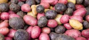 Mor Patates Kolon Kanserini Önleyebilir
