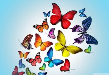 Neden Midenizde Kelebekler Uçuşur?
