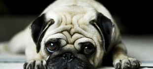 Köpeğinizin Size Mesajı Var