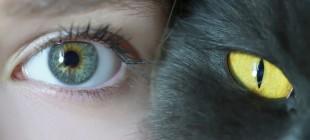 Gözlerimiz Neden Öndedir?