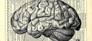 Beynin Evrimi Üzerine Düşüncelerin Tarihi II: Scala Naturae ve Filogenetik Ağaç