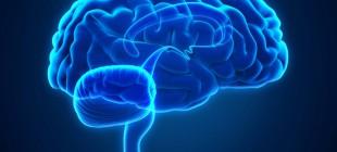 Beynin Evrimi Üzerine Düşüncelerin Tarihi IV: Doğal Seleksiyon ve Gelişimsel Kısıtlamalar