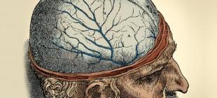 Beynin Evrimi Üzerine Düşüncelerin Tarihi III: Allometri ve Beyin Büyüklüğü
