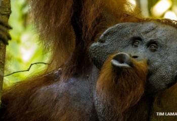 Dil Evriminde 'Öpücük' Basamağı